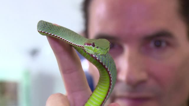stockvideo's en b-roll-footage met for nearly 30 years steve ludwin has been injecting snake venom a practice that has almost killed him - clean