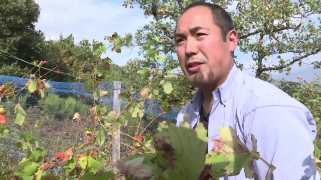 for nearly two decades japanese former chemist hirotake ooka has been on a quest to make the very best and most natural french wine possible - possible stock videos & royalty-free footage