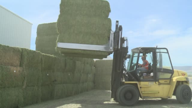 forage processing for export to asia at calaway trading in washington state - alfalfa hay stock videos & royalty-free footage