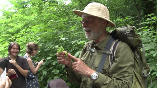 foraging for wild edible plants and berries is becoming a popular pastime in new york with several restaurants now selling dishes that can be sourced... - futter suchen stock-videos und b-roll-filmmaterial