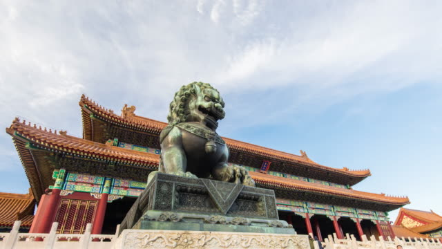 forbidden city - cat family stock videos and b-roll footage