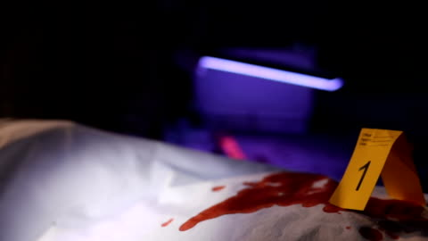 forensics looking for evidence - gory of dead people stock videos & royalty-free footage