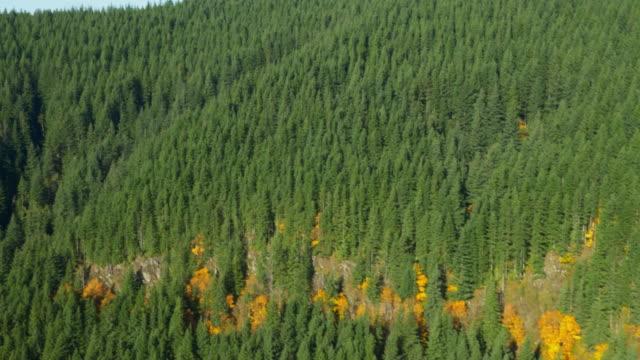 forest 02 - oregon stato usa video stock e b–roll
