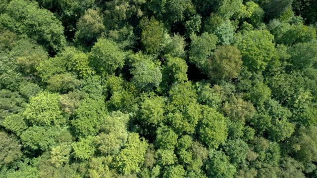 Forest Flygfoto