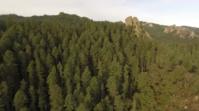 forest aerial view - mexican american stock videos & royalty-free footage