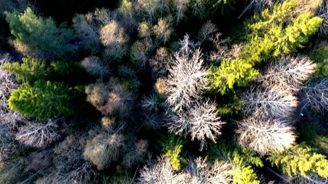 forest luftaufnahme - schweden stock-videos und b-roll-filmmaterial