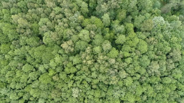 vidéos et rushes de vue aérienne de la forêt - pin