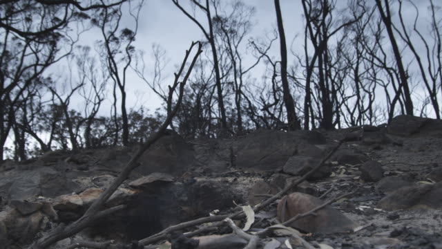 MS Forest after bushfire still smoulders / Victoria, Australia