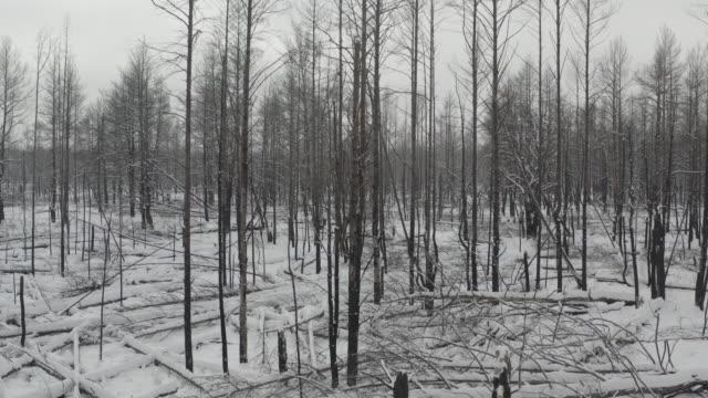 stockvideo's en b-roll-footage met bos na brand in de chernobyl-zone - kernenergie