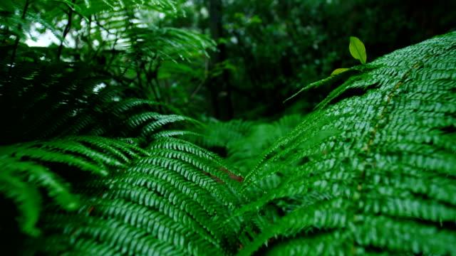 Wald nach Regen