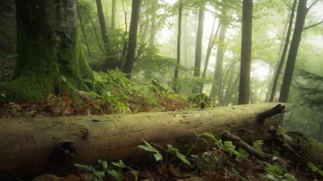 forest after rain - コケ点の映像素材/bロール