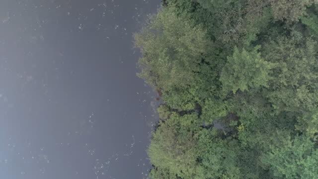 skog längs floden, täckt av stark morgondimma. pennsylvania, usa. aerial drone video med panorering kamerarörelse, tittar ner. - poconobergen bildbanksvideor och videomaterial från bakom kulisserna