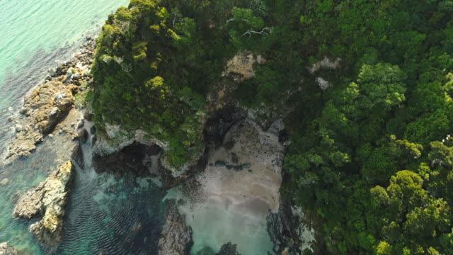 skog och strand. - bay of islands nya zeeland bildbanksvideor och videomaterial från bakom kulisserna