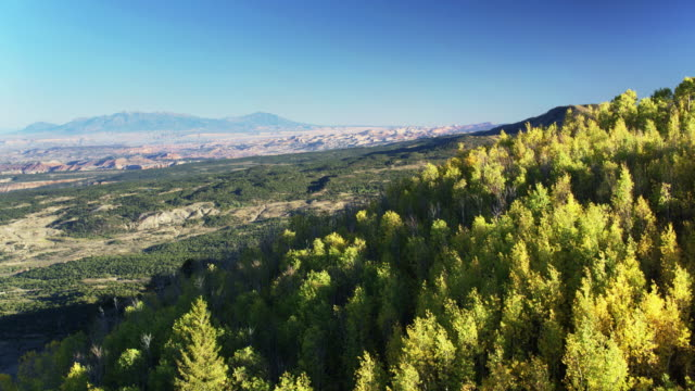 forest and chaparral on hillside in utah - drone shot - moab utah stock videos & royalty-free footage