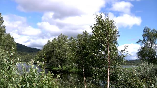 Forest und creek timelapse