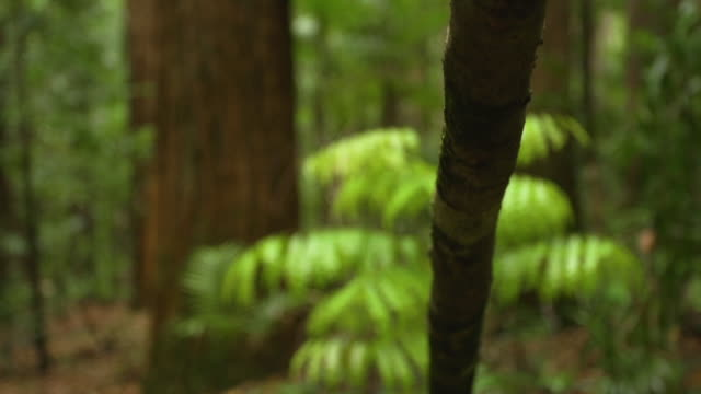 vídeos de stock, filmes e b-roll de forest and jungle branch - arbusto tropical