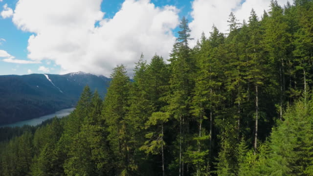 forest and mountains - overhead cable car stock videos & royalty-free footage