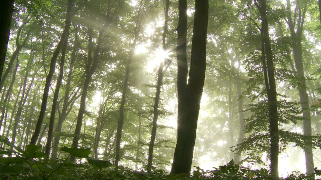 forest and rays of light