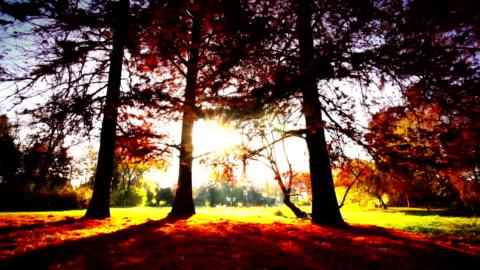 森林と太陽をお楽しみいただけます。 - 踏む点の映像素材/bロール