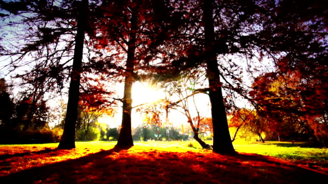 forest and the sun. - stepping stock videos & royalty-free footage
