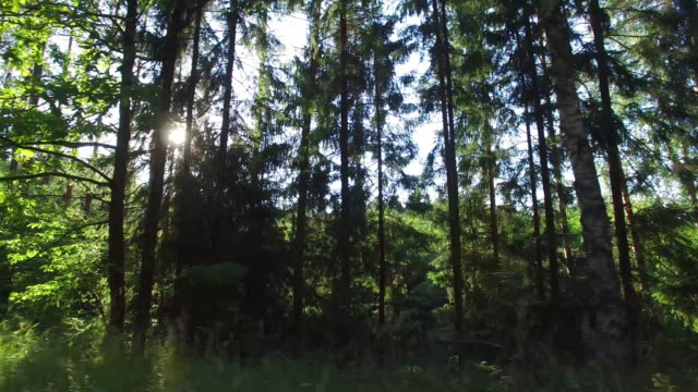 forest and trees through the car window 4k - side view stock videos & royalty-free footage