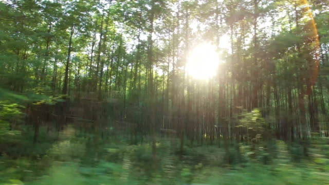 Forest and trees through the car window 4K