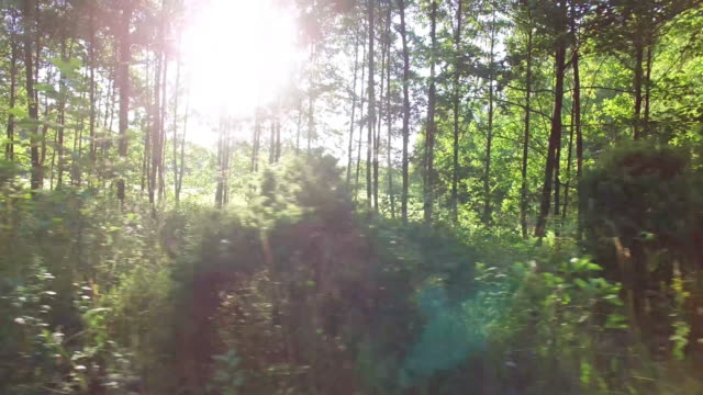 foresta e alberi attraverso la finestra 4 k auto - moving past video stock e b–roll