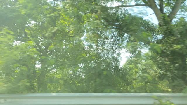 wald und bäume durch das autofenster - seitenansicht stock-videos und b-roll-filmmaterial