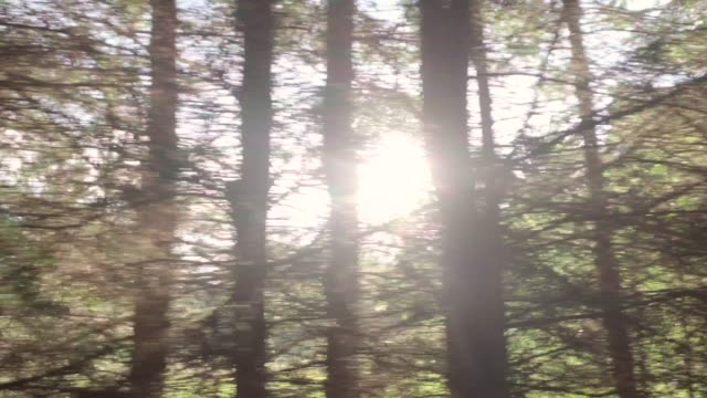 forest and trees through the car window - moving down stock videos & royalty-free footage
