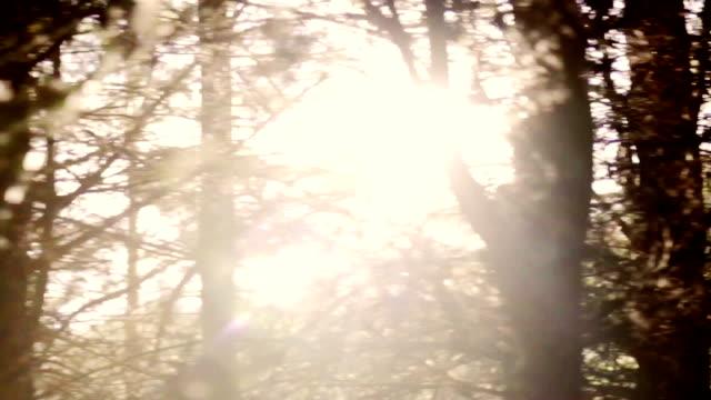 foresta e alberi attraverso la finestra auto - fuggire video stock e b–roll