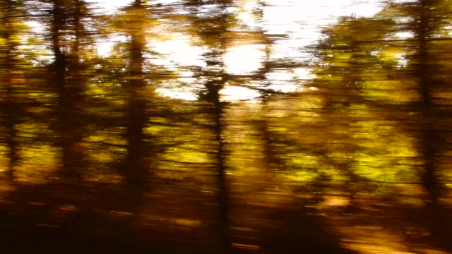 forest and trees through the car window - tripping falling stock videos and b-roll footage