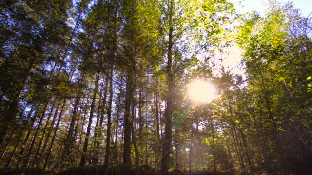 Wald und Bäume im Auto Fenster