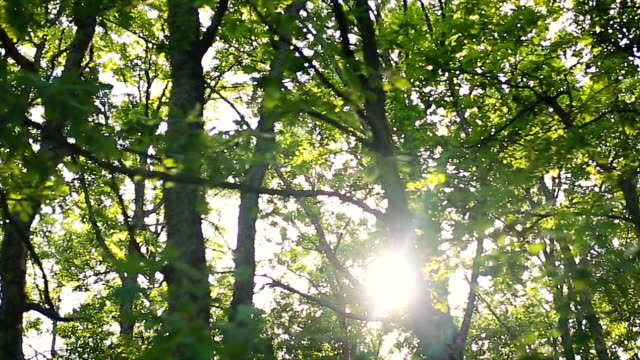 forest and trees through the car window - moving past video stock e b–roll