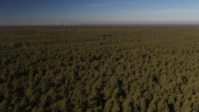 forest and windpark at the horizon, germany, europe - reforestation stock videos and b-roll footage