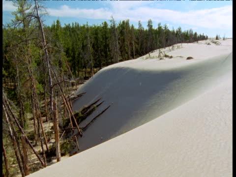 forest at edge of athabasca dunes, saskatchewan - saskatchewan stock videos and b-roll footage