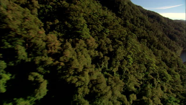 LOW AERIAL, Forest at fjord, Fiordland National Park, New Zealand