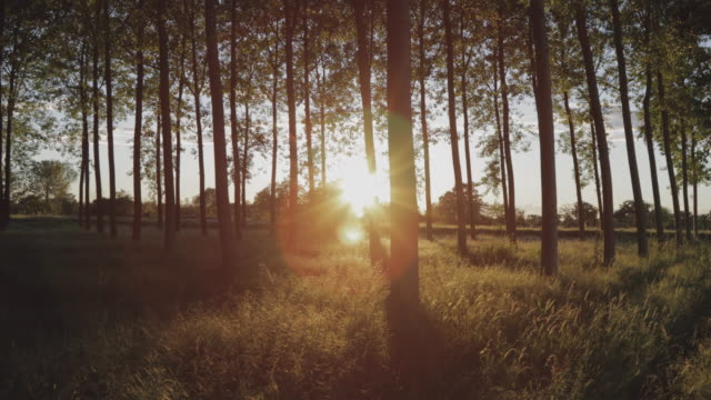 forest at sunset - nature reserve stock videos & royalty-free footage