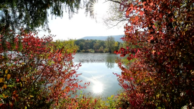Forest at the lakeshore in autumn, Mondfeld, Wertheim, Main-Tauber-Kreis, Baden-Württemberg, Germany