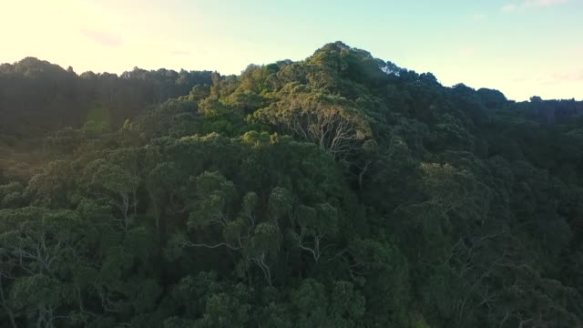Forest at waihi beach.