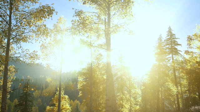forest bathed in autumn sunshine - kraneinstellung stock-videos und b-roll-filmmaterial