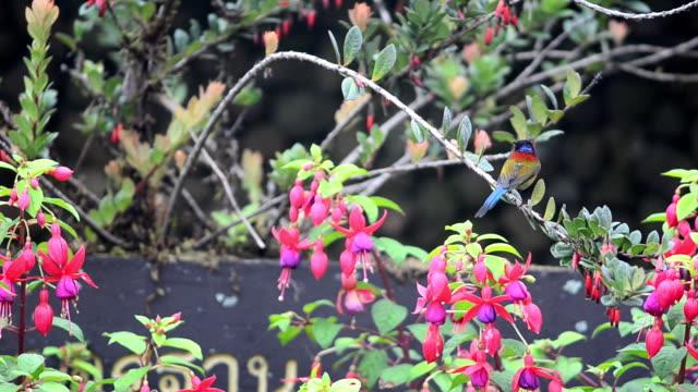 森林の鳥 - 永久運動点の映像素材/bロール