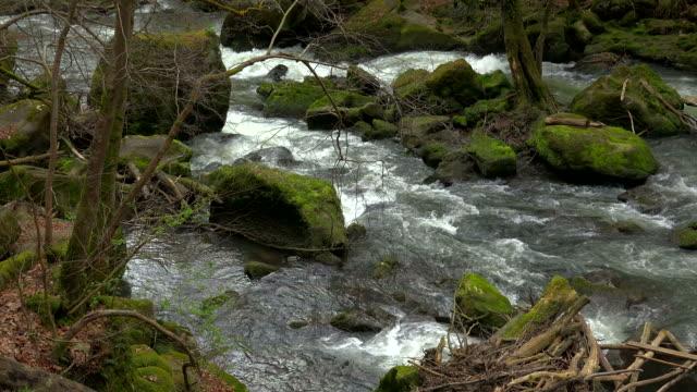 forest brook - geschützte naturlandschaft stock-videos und b-roll-filmmaterial
