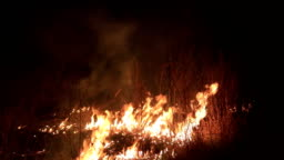 Forest burns out of control night. Flame burning on grass in countryside