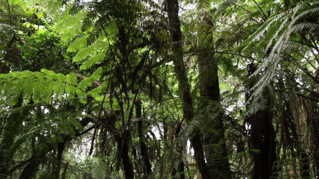 forest canopy in tanzania - wiese stock videos & royalty-free footage