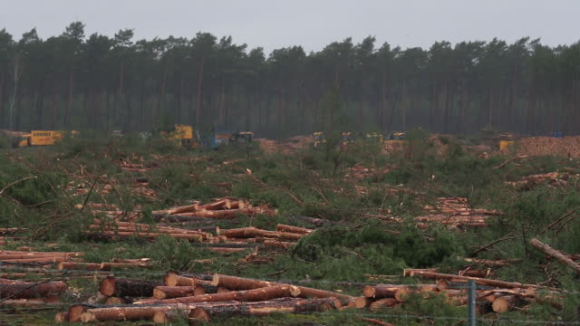 forest clearing work for the tesla inc gigafactory in grünheide germany on sunday february 23 2020 - kiefer stock-videos und b-roll-filmmaterial