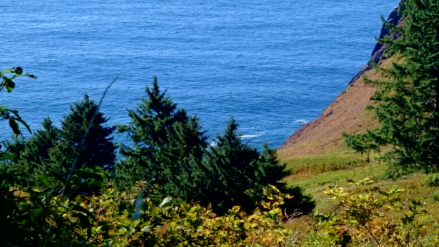 forest cliffs and pacific ocean view from highway 101 2 oregon coast oregon 27 - oregon coast stock videos & royalty-free footage