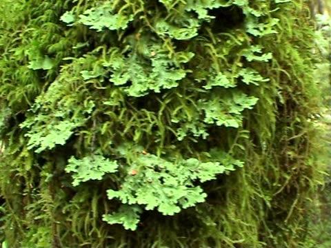 vídeos de stock, filmes e b-roll de amigo: floresta cobertos de musgos - trepadeira