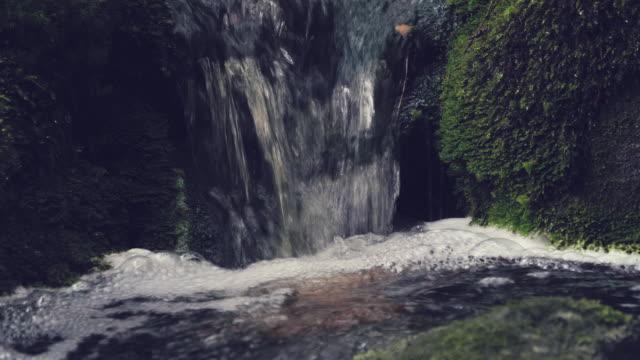 forest creek in zeitlupe - moos stock-videos und b-roll-filmmaterial