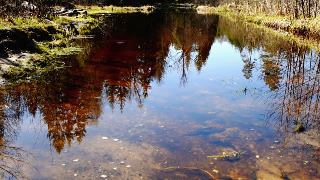 晴れた朝の森林クリーク - 四月点の映像素材/bロール