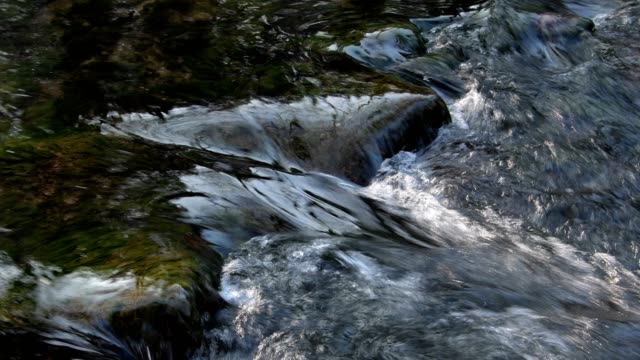 Forest creek water flows over stones